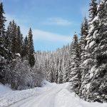 zdjęcie; droga zasypana sniegiem wokół wysokie dzrzewa, zimowy las